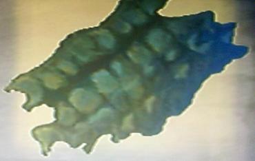 File:Questitem-Crocogators Skin.jpg