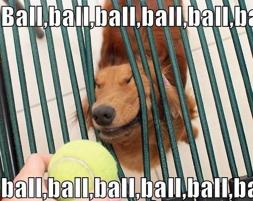 File:Dog-ball-ball-bal.jpg