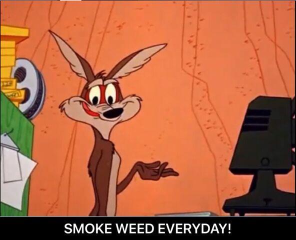 File:Wile E. Coyote Smoke Weed Everyday meme.jpeg