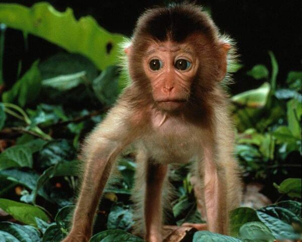 File:Funny-baby-monkey-wallpaper.jpg