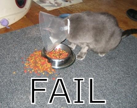 File:Cat fail Fail-s446x354-10294-580.jpg