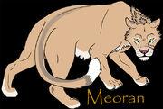 Meoran02