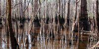 Acid Swamp