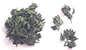 WarrigalGreens