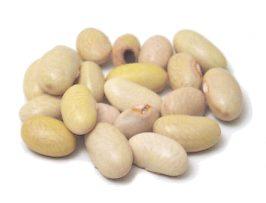 Maicoba bean