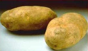 File:Potato 01.jpg
