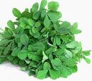 Fenugreek leaf