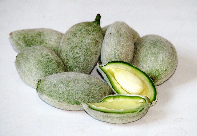 File:Green almonds.jpg