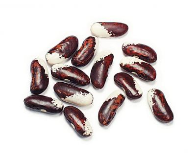 File:Appaloosa bean.jpg