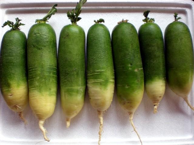 File:Green radishes.jpg