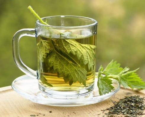 File:Nettle-tea1.jpg