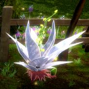 Edelweissplant