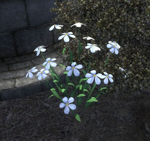 Snow Flax Plant