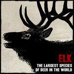 Wildlife elk