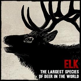 File:Wildlife elk.jpg