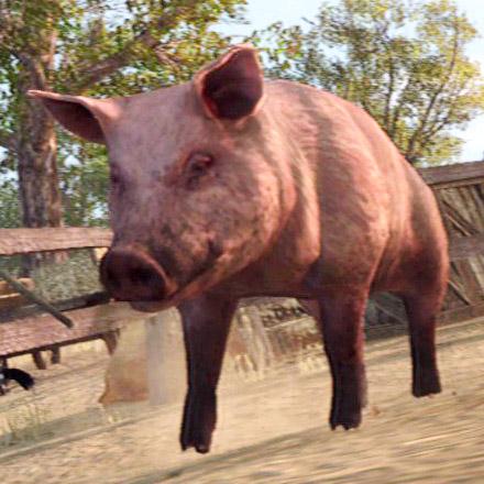 File:Pig-clean-03.jpg