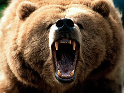 File:American Grizzly .jpg