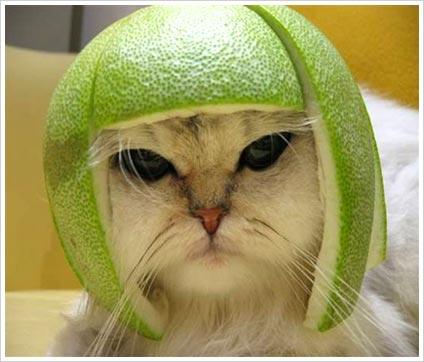 File:Funny-cat.jpg