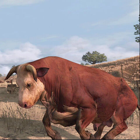 File:Bull-03.jpg