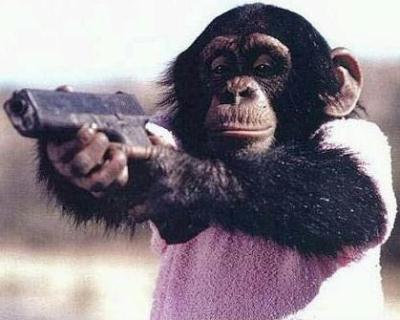 File:Gangsta-chimpweb.jpg