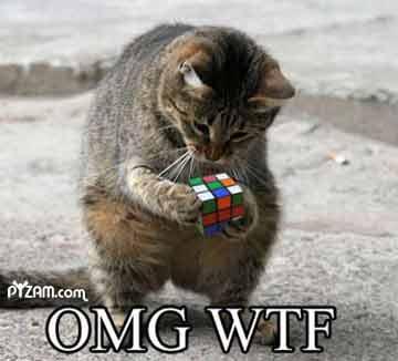 File:WTF OMG CAT!.jpg