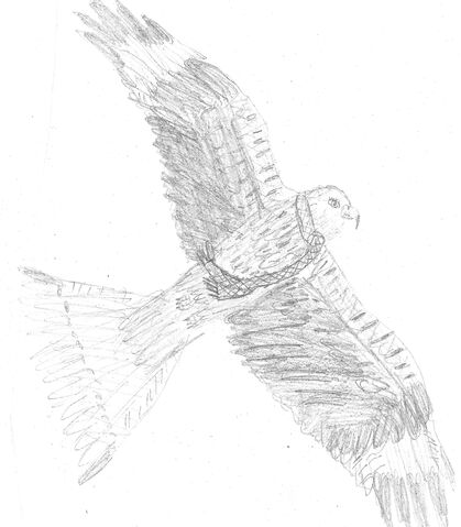 File:Red Kite.jpg