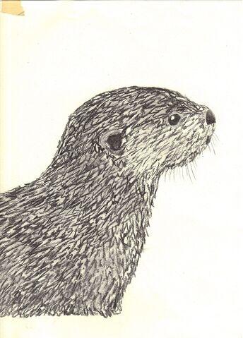 File:Charcoal otter.jpg