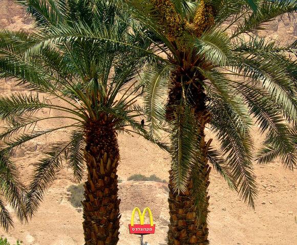 File:Desert Arches - Negev Desert, Israel-6381.jpg