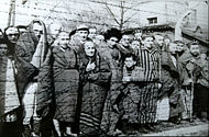 190px-Auschwitz Liberated January 1945
