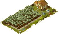 Olive grove level 3