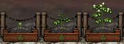 Potato Gardening