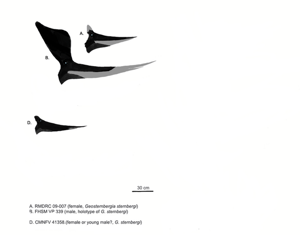 File:767px-Pteranodonts.png