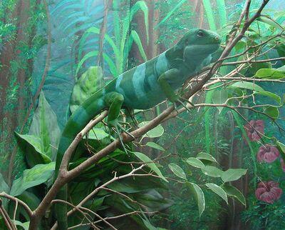 745px-Brachylophus fasciatus (Fijian Iguana)
