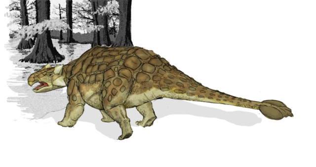 File:Ankylosaurus.png