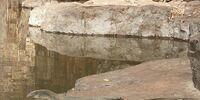 Mertens' Water Monitor