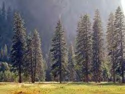 Datei:RaccoonForest.jpg