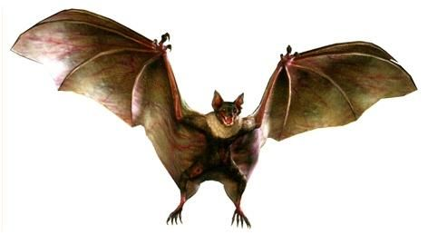 File:InfectedBATUC.jpg