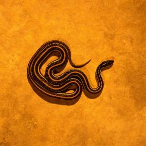 Archivo:Sacred Serpents Symbol.jpg