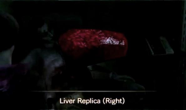 File:Liver replica (right).jpg