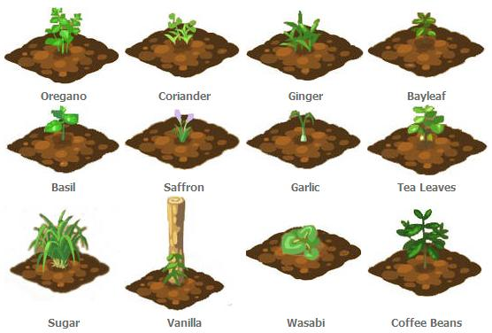 File:Final Plant Stages.jpg