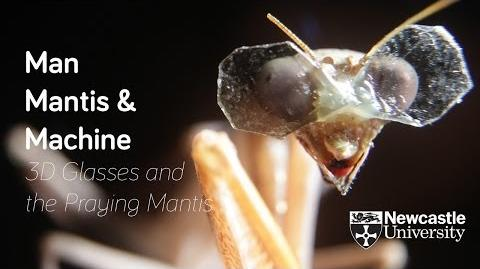 Computation Of 3D Vision In Praying Mantises