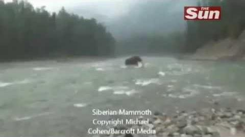 'Woolly Mammoth' spotted in Siberia?