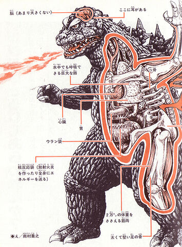 File:Kaiju04-anatomy.jpg