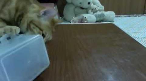 =口=當貓奴有時候真的很無言--Migou
