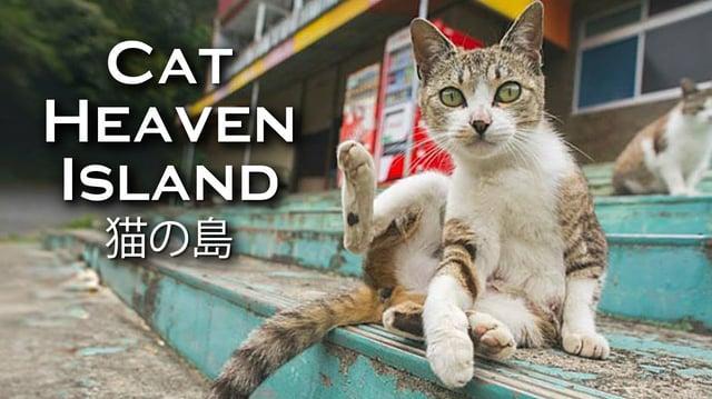 Cat Heaven Island (Featurette)