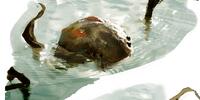 Algae-Welk Fish