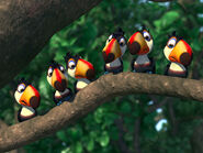 Mainpage-Navmap-Thumb-Toucan-Kids