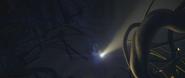 Nest in night