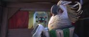 Nigel cockatoo