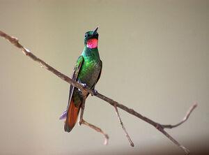 Brazillian.r.h.male
